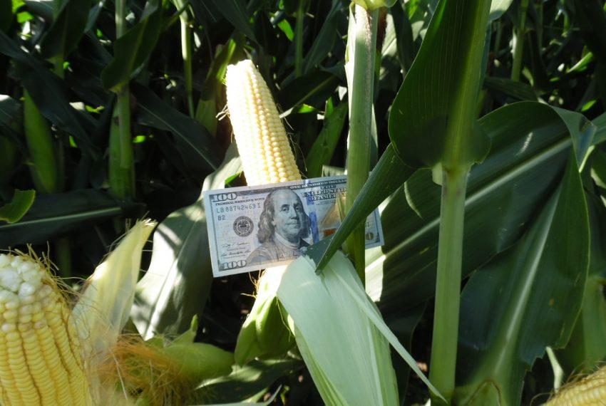 Cash Crop 2