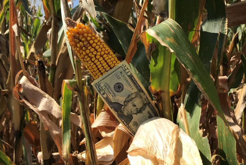 Corn & Money